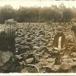 Prace w polu (Tarlowscy)