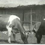 1968 - Gospodarstwo Tarłowskich